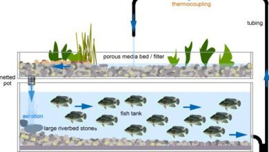 Photo of Method of raising both fish and vegetables REVIEWED