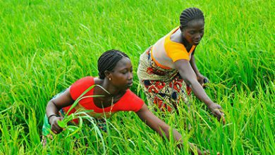 Photo of Call for Applications for Food and Agriculture Grants in Zambia